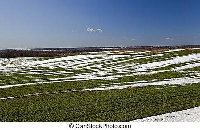 tôt, hiver, récoltes, blé, printemps