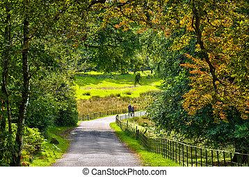 tôt, marche, couple, pays boisé, automne, par