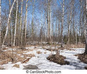 tôt, printemps, forêt