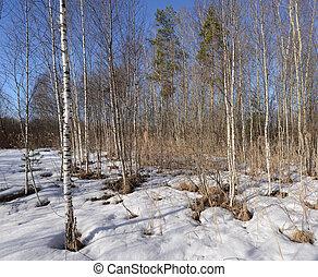 tôt, printemps, forest.