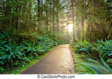 tôt, rainforest, levers de soleil, matin