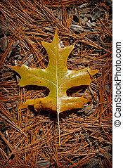 tölgy leaf