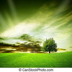 tölgyfa, alatt, egy, mező, -ban, napnyugta