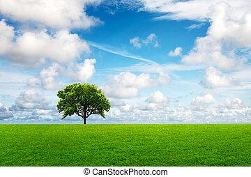 tölgyfa, alatt, nyár