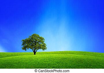 tölgyfa, alatt, természet