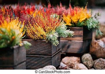 töpfe, betriebe, bunte, kleingarten, calluna, busch