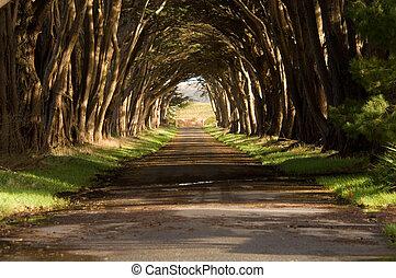 túnel, árvore cipreste