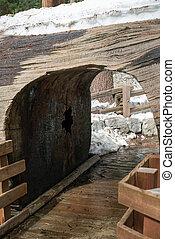 túnel, árvore, nacional, sequoia, parque