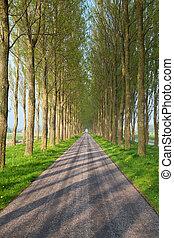 túnel, estrada, entre, árvore, filas