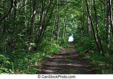 túnel, folhas, verde
