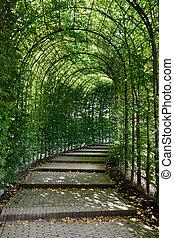 túnel, haya, alnwick, northumberland, jardín