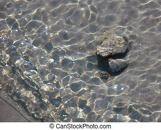 těžkopádný, minnows, právě, ne, lastury, sand., vody, vnitrozemí, moře, namočit, jalový, sea.