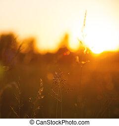 tła, łąka, kasownik, abstrakcyjny, rano