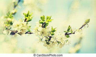 tła, jabłko, piękno, wiosna, drzewo, kwiaty