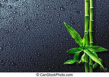 tło, -, bambus, zdrój, krople
