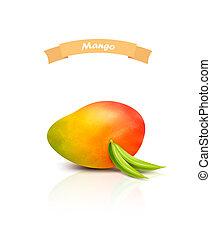 tło., biały, mangowiec, odizolowany, vector.