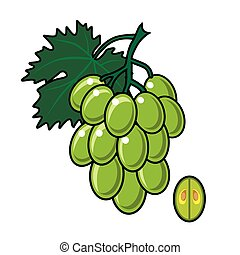 tło., biały, zielony, odizolowany, winogrona