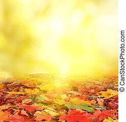 tło, jesień