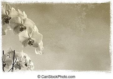 tło, kwiatowy, tło, /, skład, z, orchidee, na, szorstka...