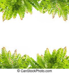 tło., liście, zieleń biała