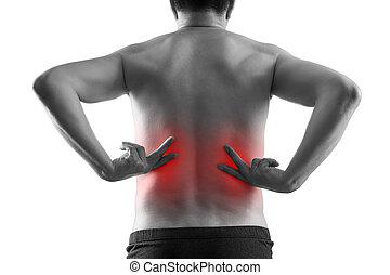 tło, moczowy, pojęcie, ból, biały, system, kamienie, człowiek, chroniczny, ciało, odizolowany, choroby, nerka