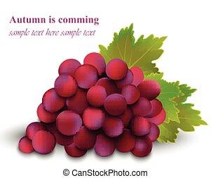 tło., pora, odizolowany, ilustracja, jesień, realistyczny, wektor, kardynał, winogrona, biały, żniwa, czerwony
