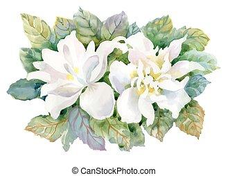 tło., rozkwiecony, akwarela, biały, lato, ogrodowy kwiat