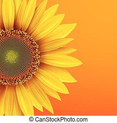 tło, słonecznik
