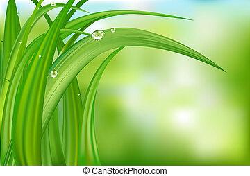 tło, trawa, zielony