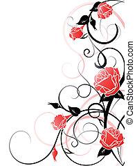 tło, wektor, róża