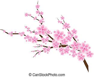 třešně květ