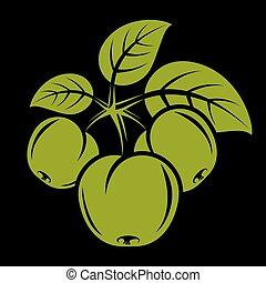 tři, nezkušený, jednoduchý, vektor, jablko, s, list, zralý, lahodnost, ovoce, illustration., zdravý, a, organický food, sklízet, období, symbol.