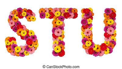 t, alfabeto, isolado, -, s, letra, flor, u, branca