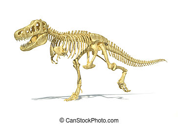 T-Rex dinosaur full skeleton, photo-realistic, scientifically correct. Perspective view on white background with drop shadow and clipping path.