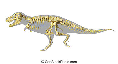 T-Rex dinosaur photo-realistic full skeleton, scientifically correct. side view with body silhouette. Clipping path included.