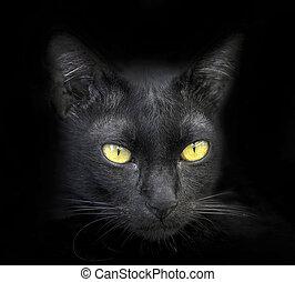 ta, čelit, o, jeden, čerň, cat.