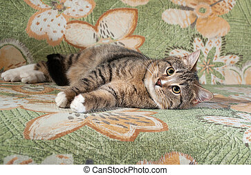 Tabby and white cat lying on couch