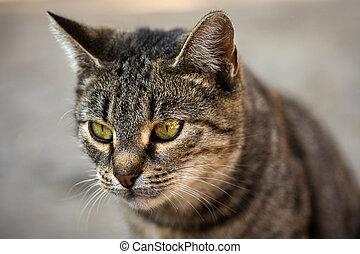 tabby cat animal portrait