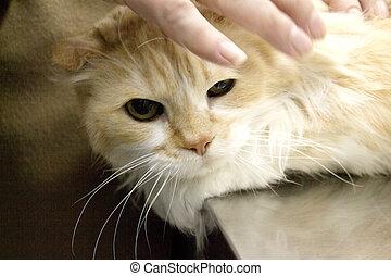 Tabby cat at the veterinarian office