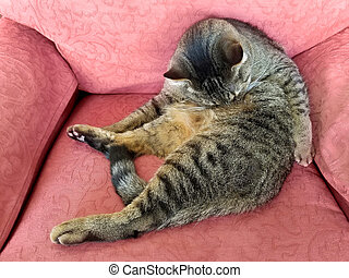 tabby cat grooming on retro chair