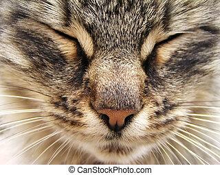 Tabby cat head close-up