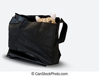 tabby cat in black sack on white