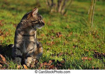 Tabby cat in the autumn garden