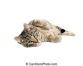 Tabby cat laying down - Cute tabby cat laying down isolated ...