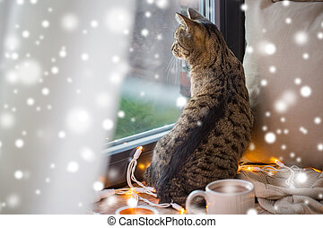 tabby cat looking through window at home over snow