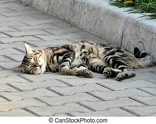 tabby cat lying and sleeping on the sidewalk
