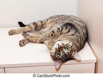 Tabby cat lying on dresser feet up