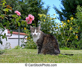 tabby cat on grass with roses