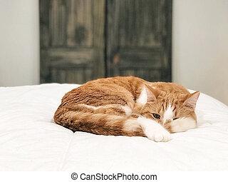 tabby cat on white duvet