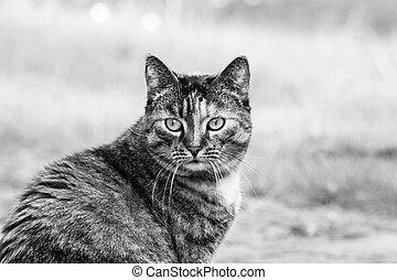 Tabby cat outdoor.